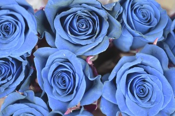 rose-821184_1920.jpg