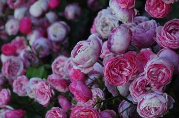 roses-2966208_1920.jpg