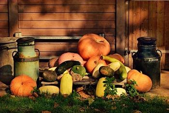 pumpkin-3775726_640.jpg